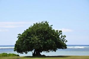 tree-by-the-ocean