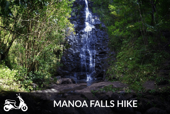 Manoa Falls Tour